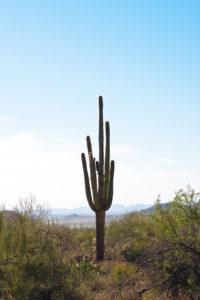 A lone cactus rises above a bleak landscape.