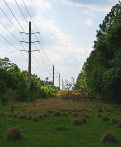 A fallen tree emerges from the forest with power lines parallel.